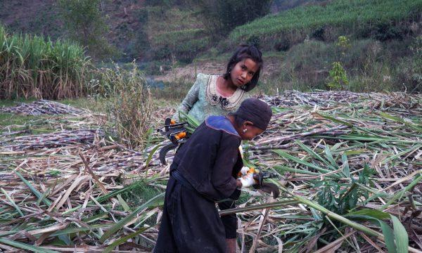 Image du film Ta'ang