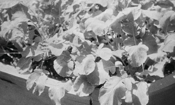 Image du film Grass
